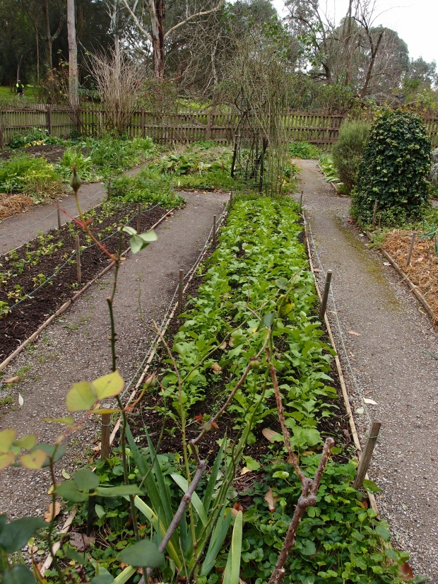 Just one of Sunday Reed's vegetable garden beds