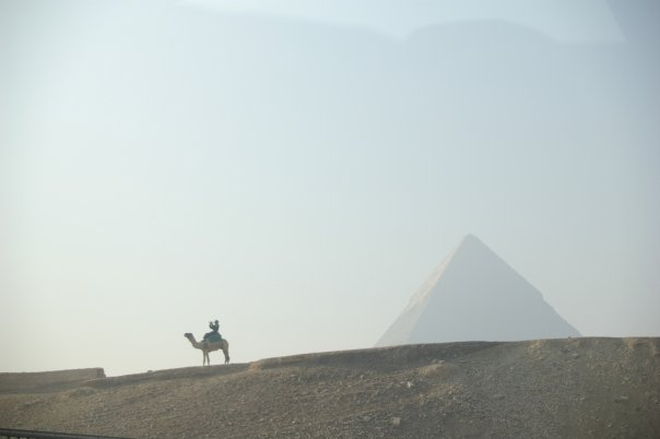 A well versed image of Egypt: a great camel at the great pyramid