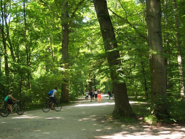 Englische Garten has many open green spaces and dense woods.